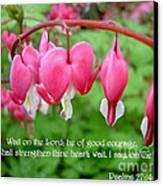 Psalms 27 14 Bleeding Hearts Canvas Print by Sara  Raber