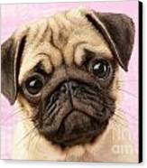 Pug Portrait Canvas Print by Greg Cuddiford