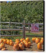Pumpkins On The Farm Canvas Print by Joann Vitali