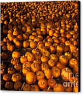 Pumpkins Canvas Print by Ron Sanford
