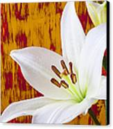 Pure White Lily Canvas Print by Garry Gay