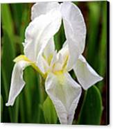 Purely White Iris Canvas Print by Kathy  White