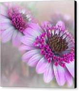 Purple Blooms Canvas Print by David and Carol Kelly