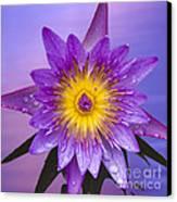Purple Canvas Print by Heiko Koehrer-Wagner