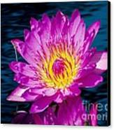 Purple Lily On The Water Canvas Print by Nick Zelinsky