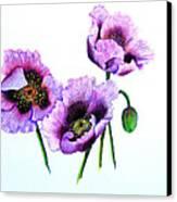 Purple Oriental Poppies Canvas Print by Karin  Dawn Kelshall- Best