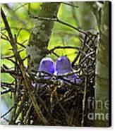 Purple Peeps Pair Canvas Print by Al Powell Photography USA