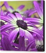 Purple Senetti Iv Canvas Print by Cate Schafer
