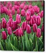 Purple Tulips Canvas Print by Inge Johnsson
