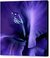 Purple Velvet Gladiolus Flower Canvas Print by Jennie Marie Schell
