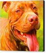 Pit Bull Portrait Canvas Print by Iain McDonald