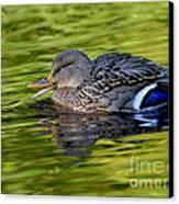 Quack Canvas Print by Sharon Talson