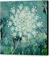 Queen Anne's Lace  Canvas Print by Ann Powell