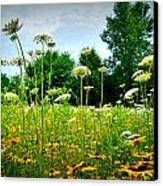 Queen Annes Lace Of The Butterfly Gardens Of Wisconsin Canvas Print by Carol Toepke