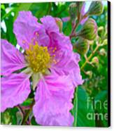 Queen Flower Or Giant Crepe Myrtle Flower Canvas Print by Lanjee Chee