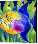 Queen Triggerfish Canvas Print by Stephen Anderson