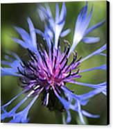 Radiant Flower Canvas Print by Belinda Greb