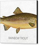 Rainbow Trout Canvas Print by Aged Pixel