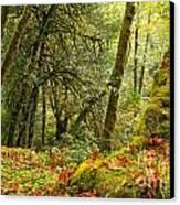 Rainforest Trunk Canvas Print by Adam Jewell