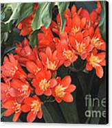 Red Blossoms At Lax Canvas Print by Deborah Smolinske
