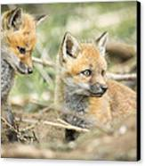 Red Fox Kits Canvas Print by Everet Regal