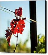 Red Grape Leaves Canvas Print by Charmian Vistaunet