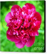 Red Peony Flower Canvas Print by Edward Fielding
