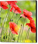 Red Poppies Canvas Print by FunCards