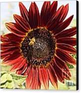 Red Sunflower And Bee Canvas Print by Kerri Mortenson