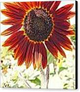 Red Sunflower Glow Canvas Print by Kerri Mortenson