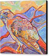 Red Tail Visit Canvas Print by Jenn Cunningham