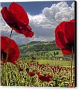 Red White And Blue Canvas Print by Debra and Dave Vanderlaan