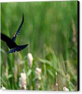 Red Winged Blackbird Canvas Print by Andrew Lahay