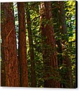 Redwood Wall Mural Panel Three Canvas Print by Artist and Photographer Laura Wrede
