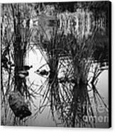 Reeds Canvas Print by Arne Hansen