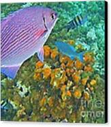 Reef Life Canvas Print by John Malone