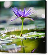 Reflection Of Life Canvas Print by Charles Dobbs