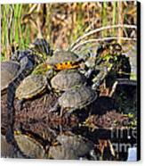 Reptile Refuge Canvas Print by Al Powell Photography USA