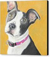 Rescued Pit Bull Canvas Print by Jeanne Fischer