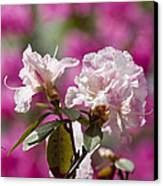 Rhododendron Canvas Print by Steven Ralser