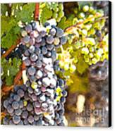 Ripe Grapes Canvas Print by Artist and Photographer Laura Wrede