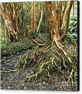 Roots Canvas Print by James Brunker