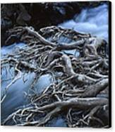 Roots Over Ozark Stream Canvas Print by Garry McMichael