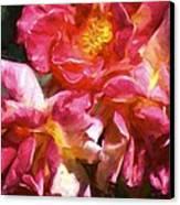 Rose 115 Canvas Print by Pamela Cooper