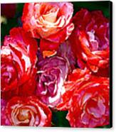 Rose 124 Canvas Print by Pamela Cooper