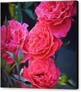 Rose 138 Canvas Print by Pamela Cooper