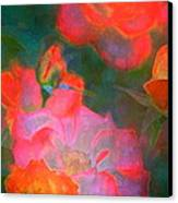 Rose 187 Canvas Print by Pamela Cooper