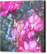 Rose 188 Canvas Print by Pamela Cooper