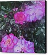 Rose 189 Canvas Print by Pamela Cooper