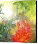 Rose 190 Canvas Print by Pamela Cooper